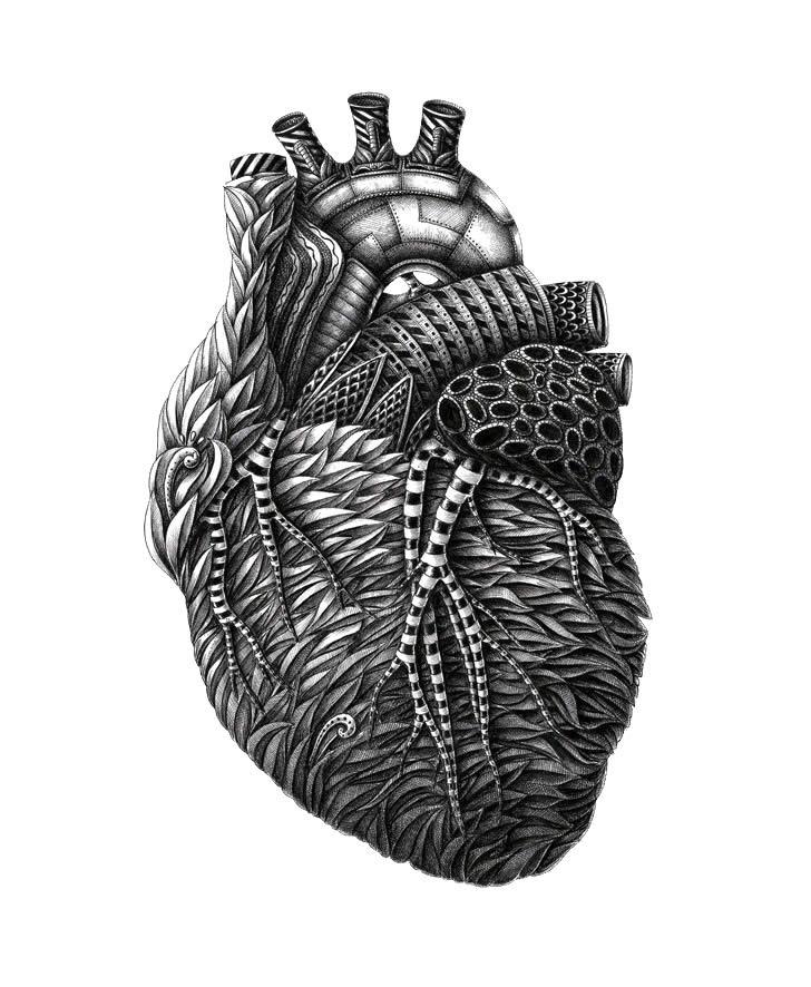 Beautiful Ink Drawing Of Anatomy