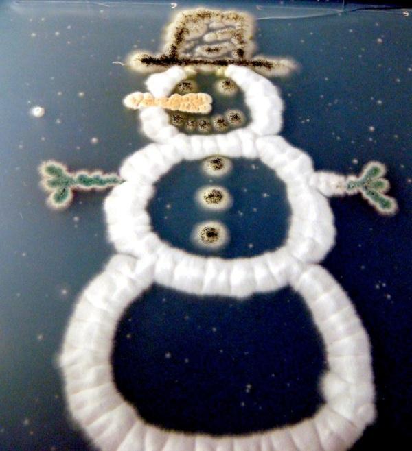 fungal-snowman