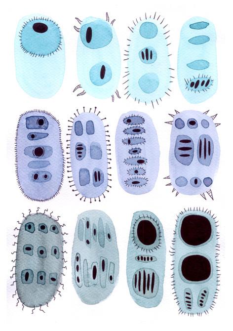 bacteria03