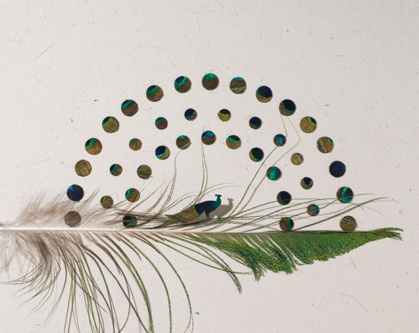 feather03