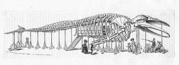 pavilionofthewhale