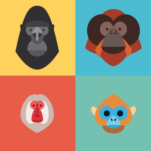 primates01