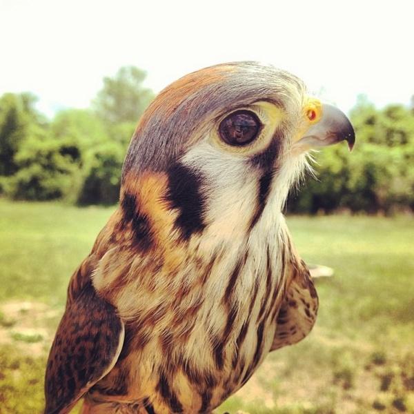 birdofprey02