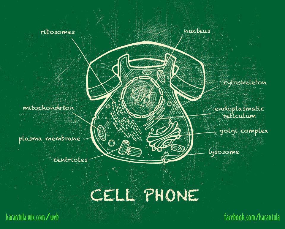 biology and cells Plant cell structure is a topic within the cell biology and is included in a-level biology this page includes a diagram of a plant cell together with notes about the parts of plant cells.