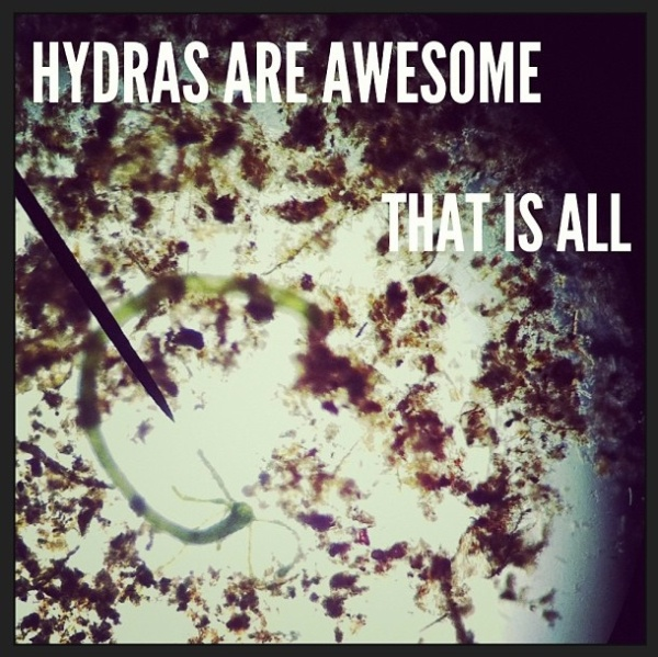 hydrasareawesome