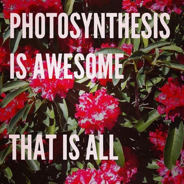 photosynthesisisawesome01