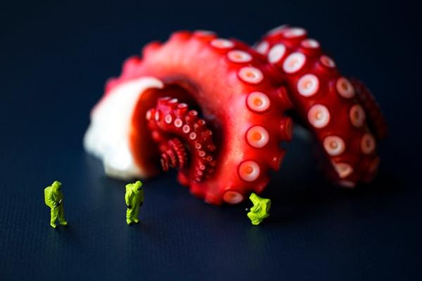 octopussurveyteam700px