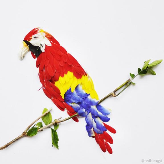 birds-4