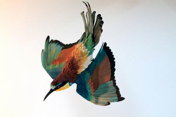 birds-61