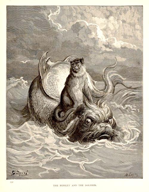 monkeyandthedolphin