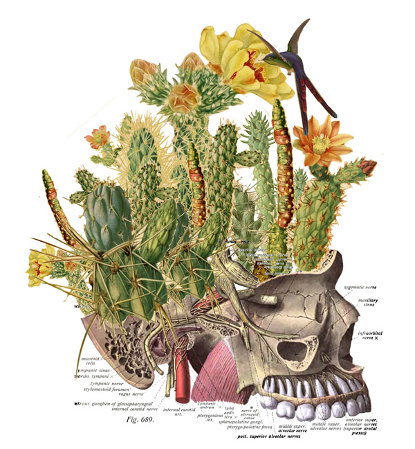 Travis-Bedal-Anatomical-Paper-Collages-6