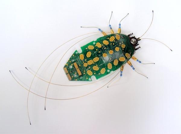 bug-5